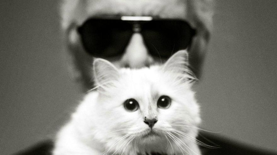 Succession Karl Lagerfeld Choupette