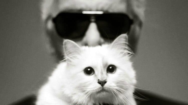 Succession Karl Lagerfeld Choupette